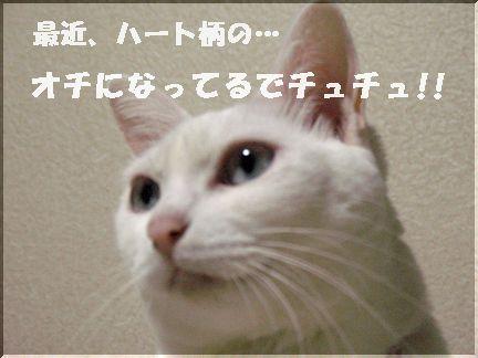 チュチュは立派に大人でチュチュ!!☆とまみさ★だけでちゅ!!
