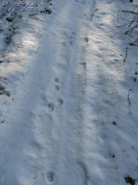 9387雪の上の動物の足跡110102