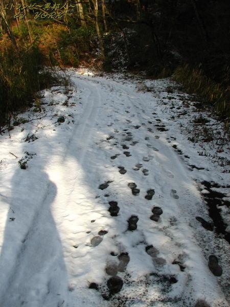 9369雪の上の足跡110102