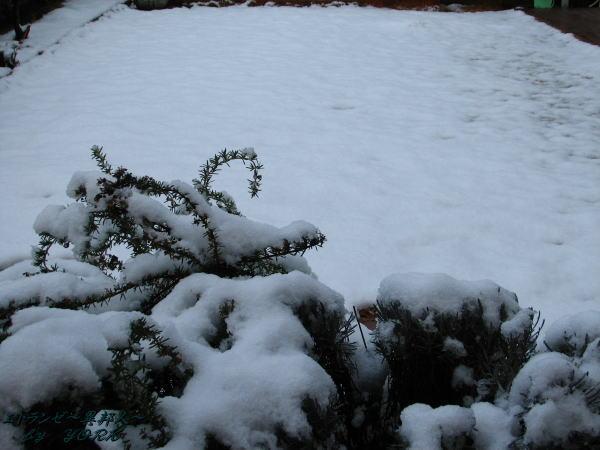 9603雪の朝110215