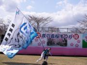さくらYOSAKOI  2010-10