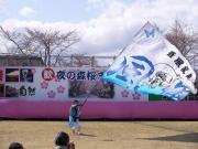 さくらYOSAKOI  2010-9