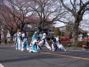 さくらYOSAKOI  2010-18
