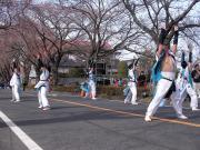 さくらYOSAKOI  2010-17
