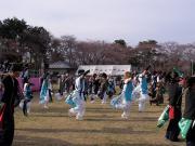 さくらYOSAKOI  2010-21