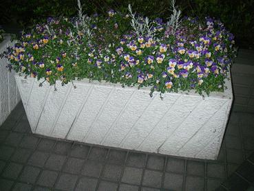 20100429植木鉢