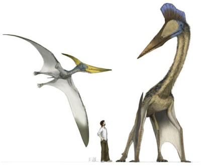 Hatzegotpteryx1.jpg