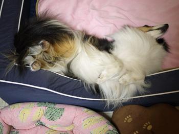 5すいかベッド