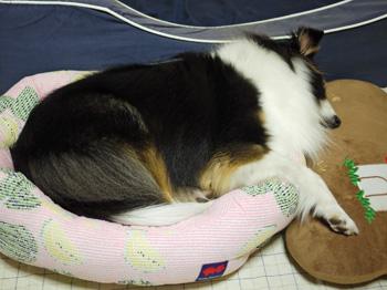 3すいかベッド