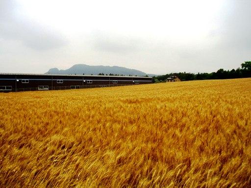 bakushuu01.jpg