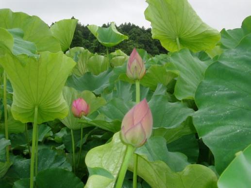 fudoki02_20110712181508.jpg