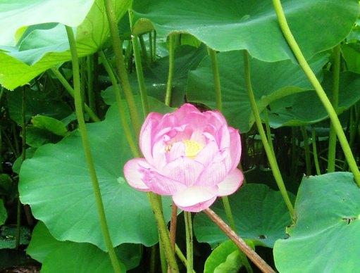 fudoki03_20110707115335.jpg