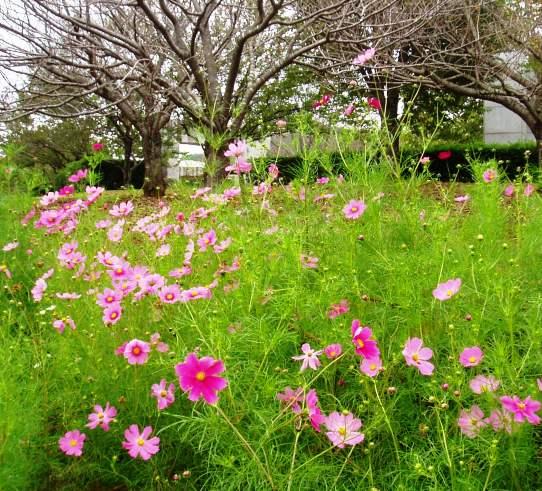 fudoki04_20111002194741.jpg
