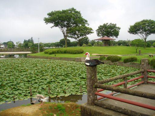 kasiwabara01.jpg