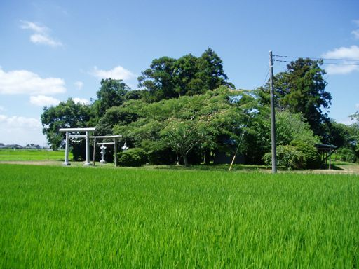 kiyotamai02.jpg