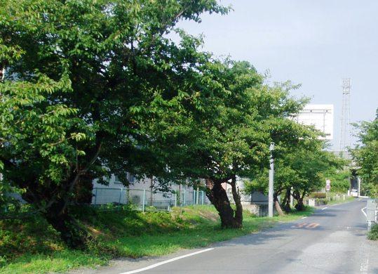 koibuchi03.jpg