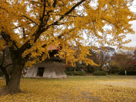 kokubunji05.jpg
