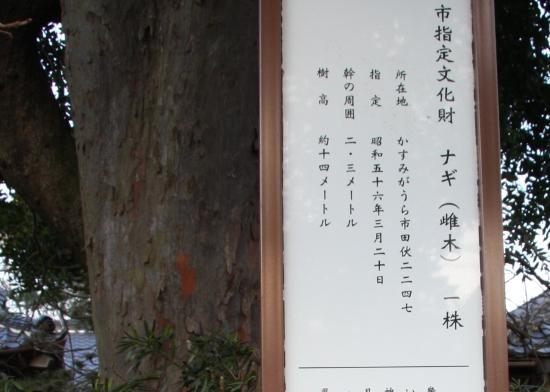 nagi03.jpg