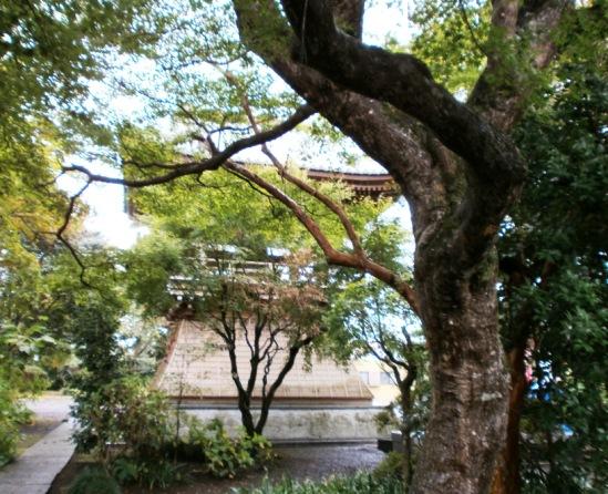 ooyama02.jpg