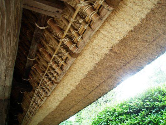 sakuraazuma03_20120205153522.jpg