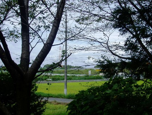 shoujyouchi06.jpg