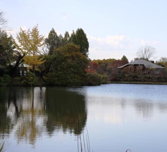 uenonuma04.jpg