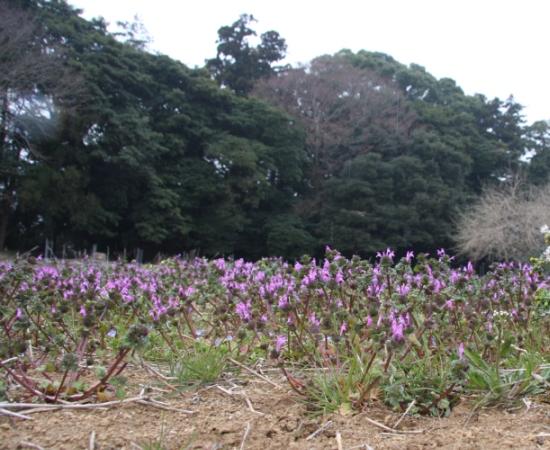 usiwatakasima05.jpg