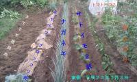 H230703野菜畑東側の植え付け状況
