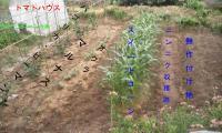H230703野菜畑西側の植え付け状況