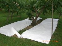 H230817樹下のタイベック