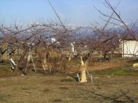 H240216畑は春の準備