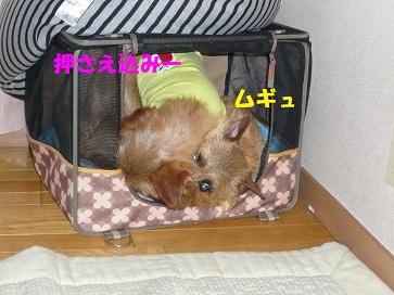 2011_0528_080009-P1050346a.jpg