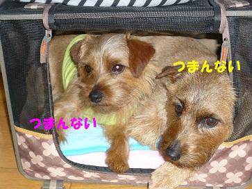 2011_0528_080211-P1050355a.jpg