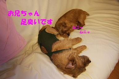 2011_0817_173951-IMG_1405a.jpg
