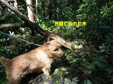 2011_0922_114200-P1050532a.jpg