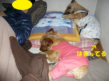 2012_0303_154414-P1050785a.jpg