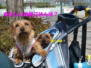 2012_0320_111402-P1050835a.jpg