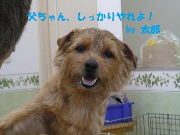2012_0324_142047-P1050852a.jpg