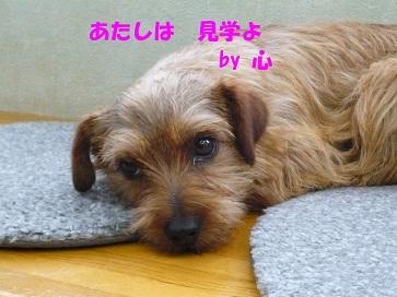 2012_0324_142120-P1050854a.jpg