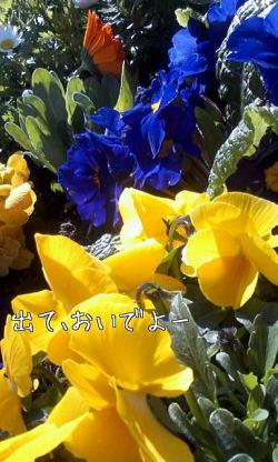m_201003301448104bb1909a2038f1.jpg