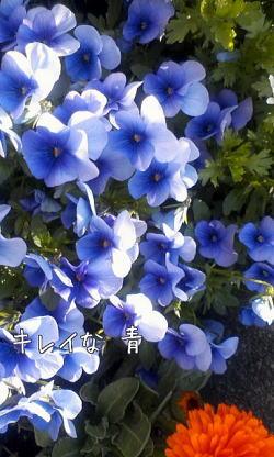 m_201003302028444bb1e06c08a0d1.jpg