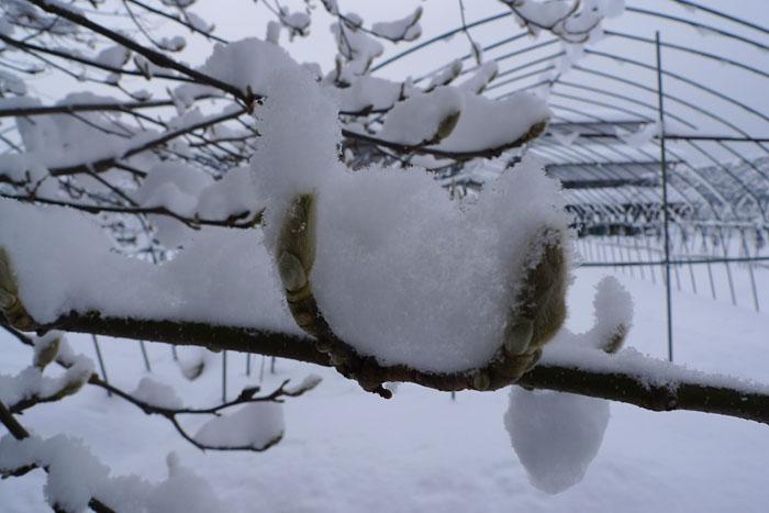 雪化粧 冬 物語 ひだ 高山 気功教室