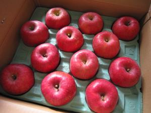 りんごー♪