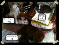 1262254683-photo.jpg