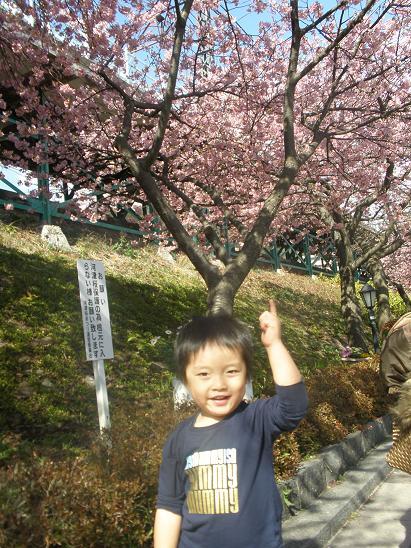 河津桜2010.2.20