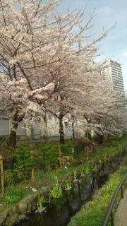 桜2010年4月