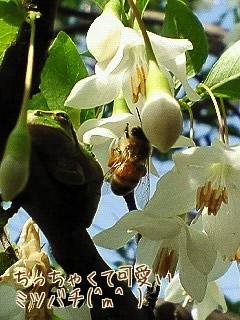 ミツバチとカエル