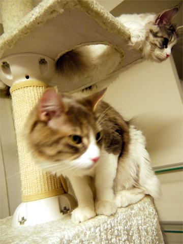cattower2.jpg