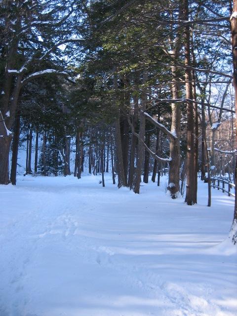 冬の円山1