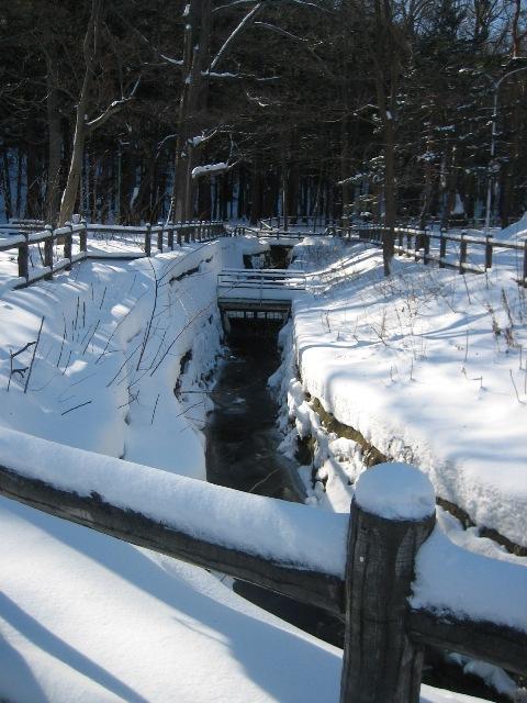 冬の円山2